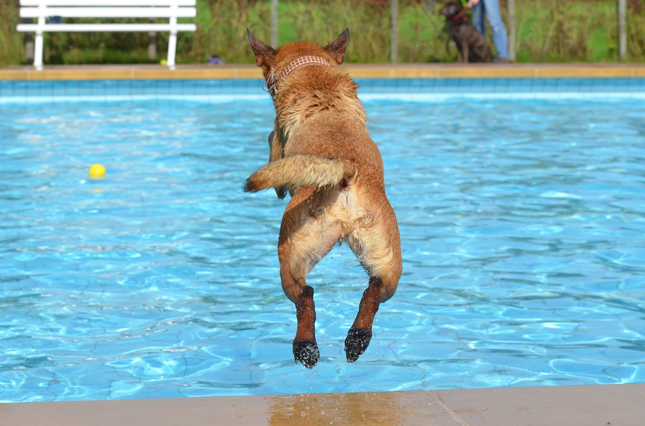 dog, outdoor pool, dog in the water-665159.jpg